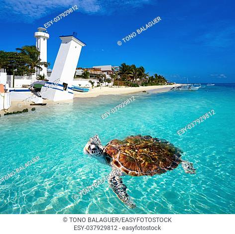 Puerto Morelos turtle photomount in Riviera Maya at Mayan Mexico
