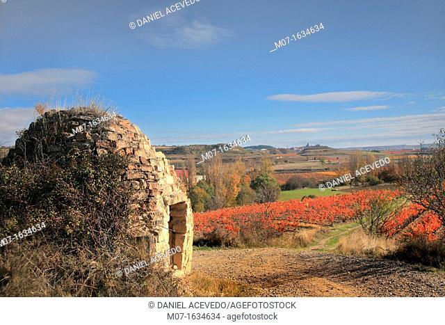 Moreda autumn scape, Alava, Spain