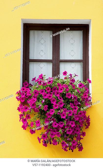 Window with petunia flowers. Porrúa, Asturias province, Spain