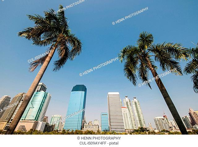 Low angle view of palm trees and sky scrapers, Benjakiti Park, Bangkok, Thailand