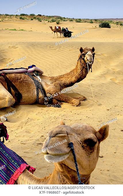 Camels on Sam dunes in Desert National Park in the Great Thar Desert,near Jaisalmer, Rajasthan, India