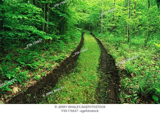 Tire tracks in the forest. Great Smoky Mountains NP. Tennessee. USA