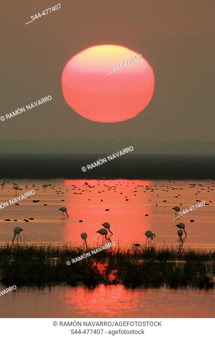 Evening in Doñana National Park. Huelva province, Andalusia, Spain