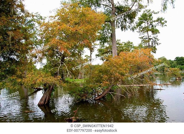 Louisiana swamp bayou