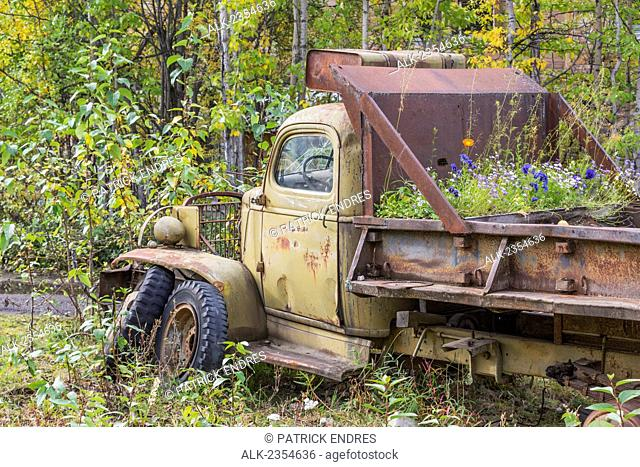 An old vintage vehicle with flowers growing in the pickup bed; McCarthy, Alaska, United States of America