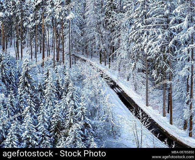 Winter landscape with snow-covered spruces, Tutzing, Upper Bavaria, Bavaria, Germany, Europe