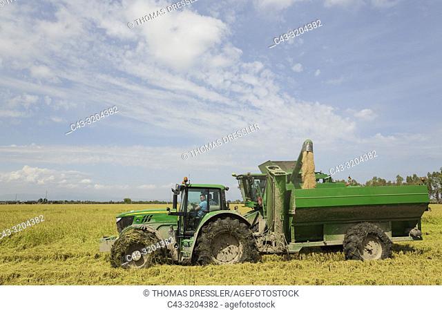 Rice (Oryza sativa) harvest in September. Environs of the Ebro Delta Nature Reserve, Tarragona province, Catalonia, Spain