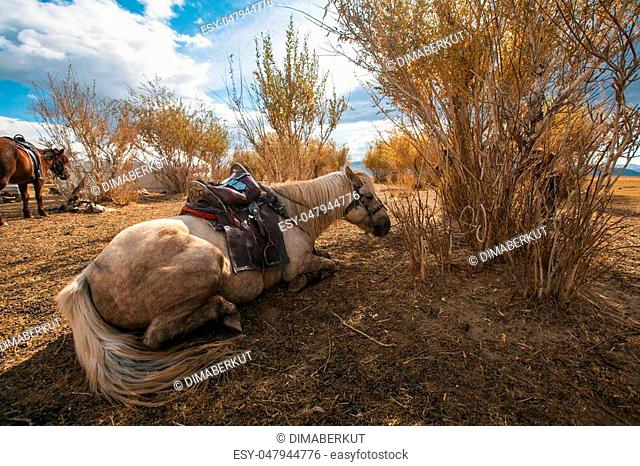 Mongolian horses are near the Yurt in the steppes of Western Mongolia