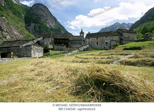 Mown grass in front of a Rustici made of stone in Sonlèrt, hamlet in the Val Bavona, a side valley of the Valle Maggia, Ticino, Switzerland, Europe