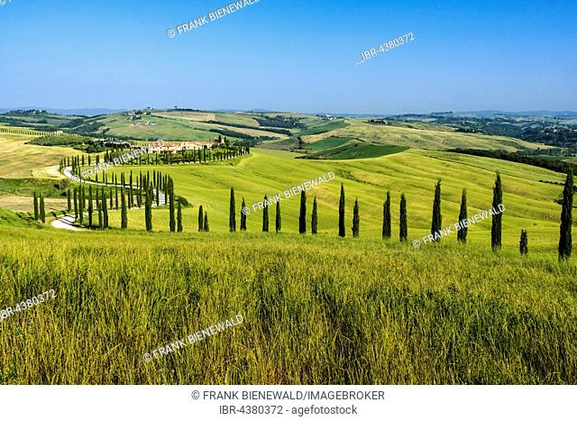 Typical green Tuscan landscape in Val d'Orcia, farm on hill, winding road, fields, cypresses and blue sky, Trequanda, Tuscany, Italy