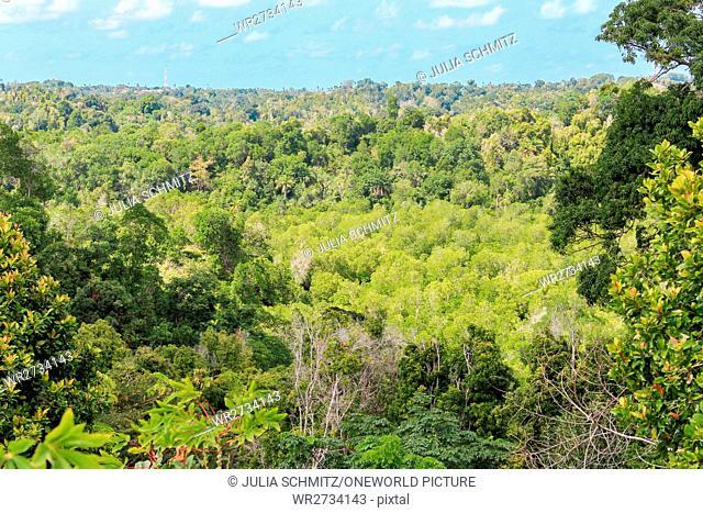 Tanzania, Zanzibar, Pemba Island, Clove Trees, Pemba Forest
