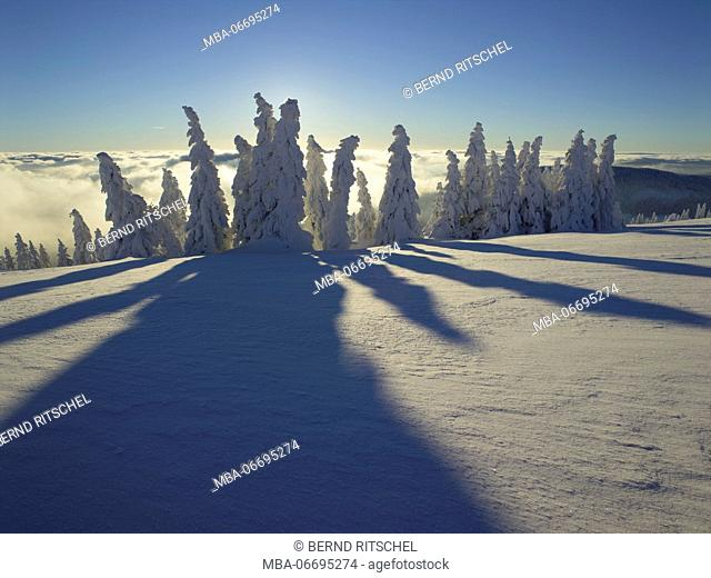 Above the clouds in the summit range of the Feldberg, Black Forest, Baden-Wuerttemberg, Germany