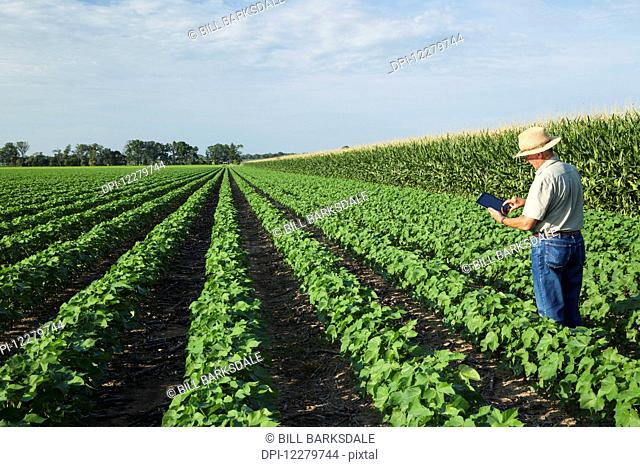 Crop consultant uses tablet to make notes of his observations while checking field of no till cotton in peak fruit development stage; England, Arkansas