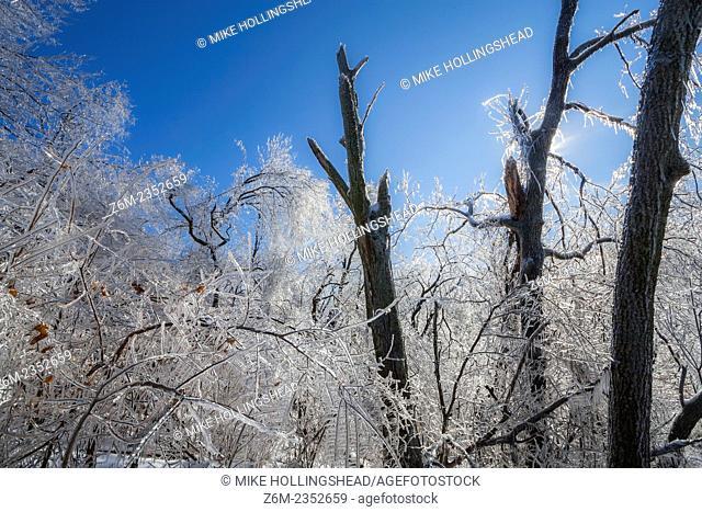Beautiful landscape after a damaging ice storm hits northwest Missouri near Mound City, December 10-11 2007