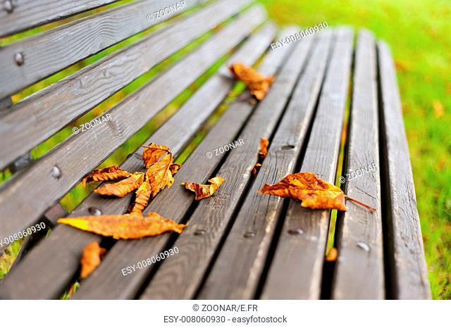 Leaves lying on park bench in autumn