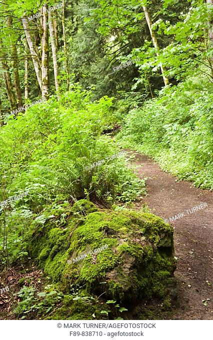 Hiking trail through lush forest passes moss-covered boulder