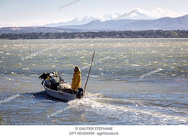 DENIS BES, FISHERMAN ON HIS BOAT, ETANG DE L'AYROLLE, GRUISSAN, AUDE (11), FRANCE
