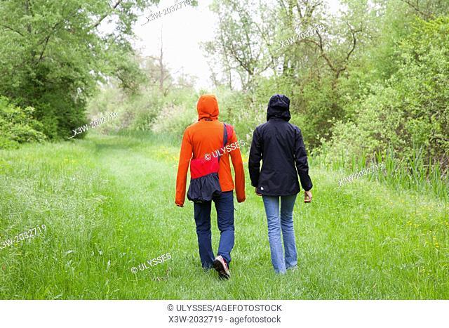 trekking in the flooded forest of punte alberete, comacchio, ferrara province, po river delta, emilia romagna, italy, europe