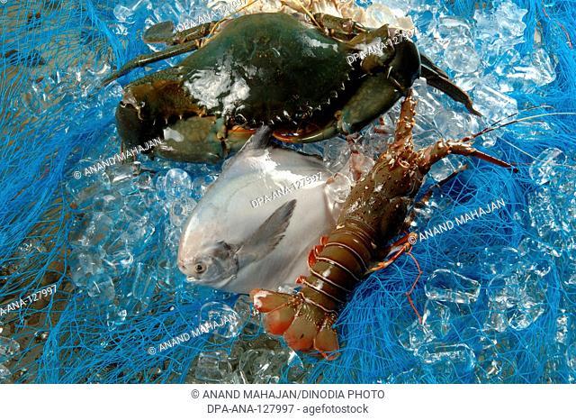 Non Vegetarian , Sea food , dead fish pomfret prawns lobsters