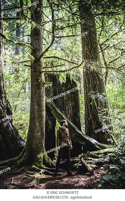 Young Man Looking Around in Redwood National and State Park, California, USA