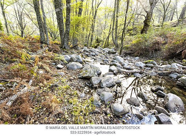 Solana Toro stream on an autumn day. Avila. Spain. Europe