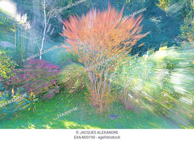 Poetic blurred autumnal landscape