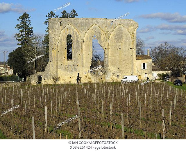 vineyard and Great Wall of 12th century Dominican monastery, Saint Emilion, Gironde Department, New Aquitaine, France