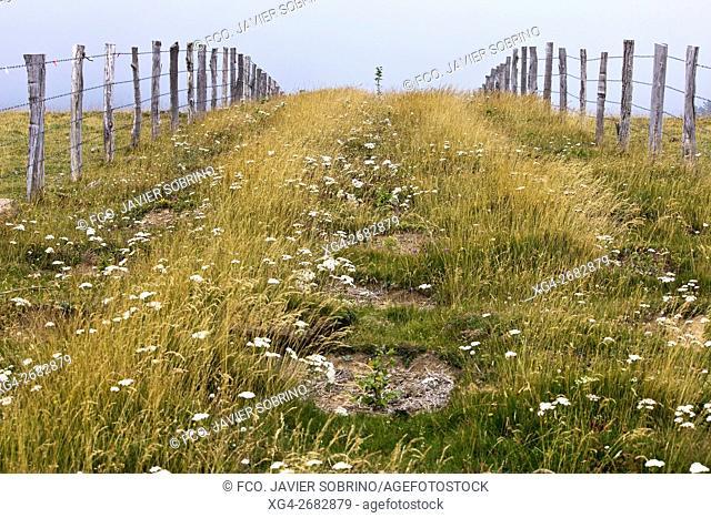 Fence, pastures in Sierra de Abodi near Irati beechwood, Ochagavia. Pyrenees Mountains, Navarra, Spain