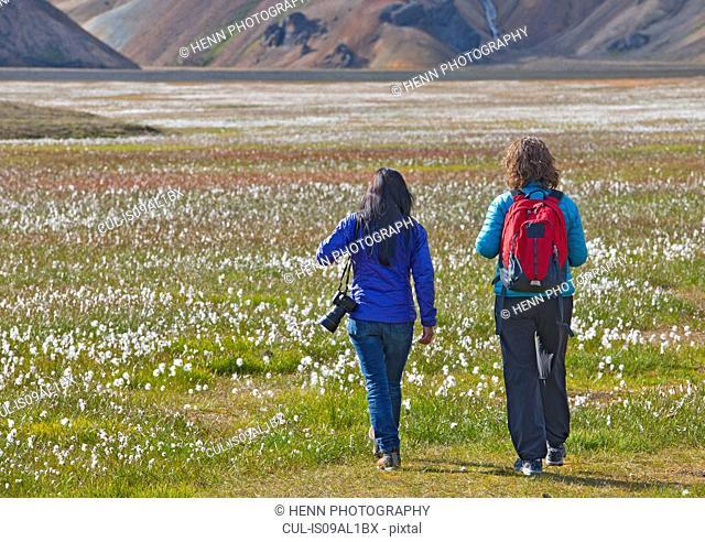 Rear view of two women walking into the cottongrass meadow at Vondugil, Landmannalaugar, Fjallabak, Iceland