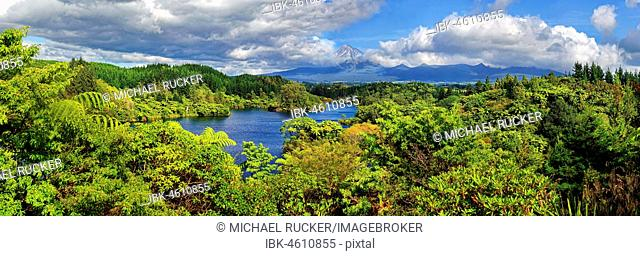 Jungle forest with lake Lake Mangammahoe and volcano Mount Taranaki, Whanganui National Park, North Island, New Zealand