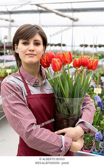 Young female gardener working in greenhouse, holding flowerpot with tulips