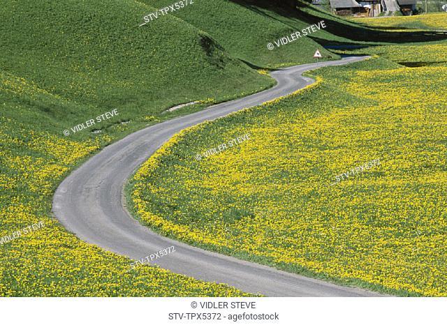 Dolomites, Empty, Flowers, Holiday, Italy, Europe, Landmark, Road, Tourism, Travel, Vacation, Wild, Winding, Yellow
