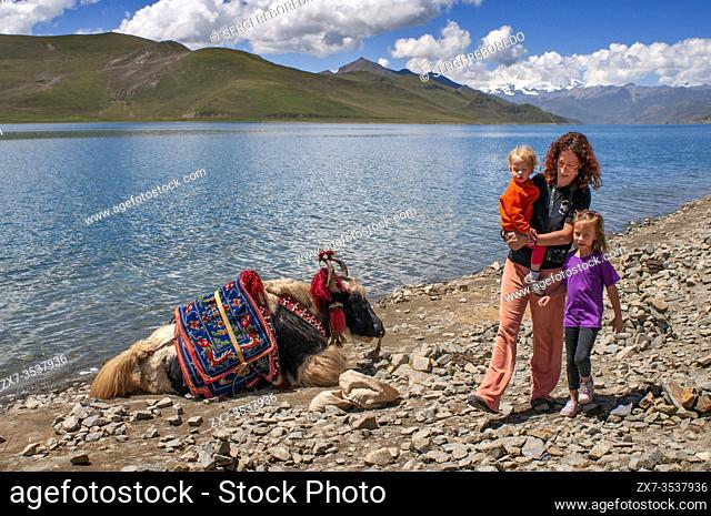 Yak in Yamdrok-tso also called Yamdrok Lake, or Yamzho Yumco is a high sacred mountain lake in Tibet China. Nestled among the flanks of the dull gray and green...
