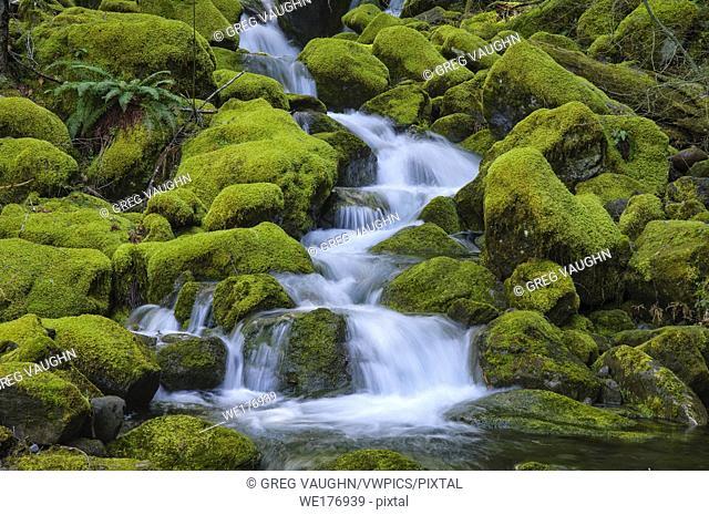 Waterfalls on Scott Creek, Willamette National Forest, Cascade Mountains, Oregon