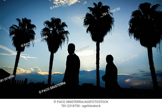 silhouettes and palms, Valencia, Spain