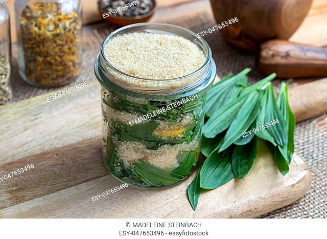 A jar filled with ribwort plantain leaves, lemon and cane sugar, to prepare homemade syrup against cough