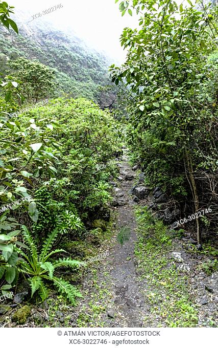 Siete Lomas natural protected space in Tenerife island