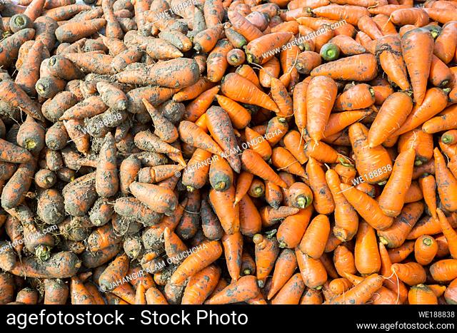 Arrange alongside washed carrots and dirty carrots. Food background. Near Savar District at Dhaka, Bangladesh