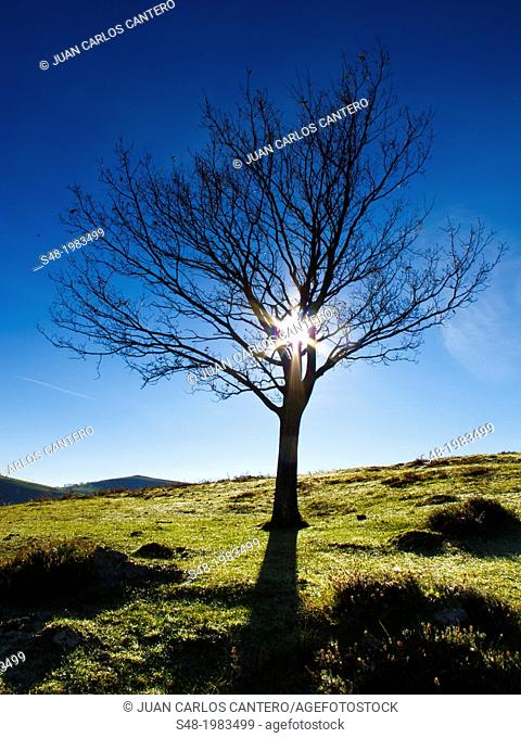 Branches tree backlit in the Victoria. Cantabria. Spain. Europe