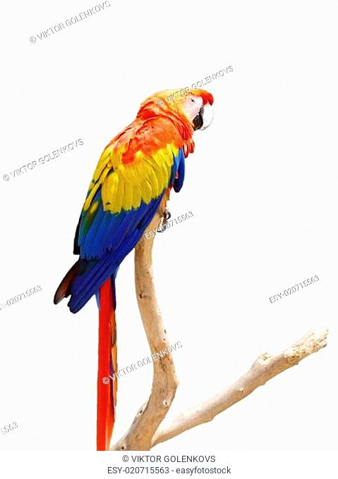 Colorful Parrot on a Tree Branch