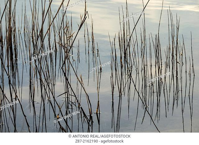 Lakes of Casalonga, valley of river Záncara, Villar de Cañas, Cuenca province, Castilla-La Mancha, Spain