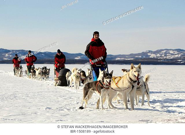 Men, mushers with dog sleds, teams of sled dogs, Alaskan Huskies, frozen Lake Laberge, Yukon Territory, Canada