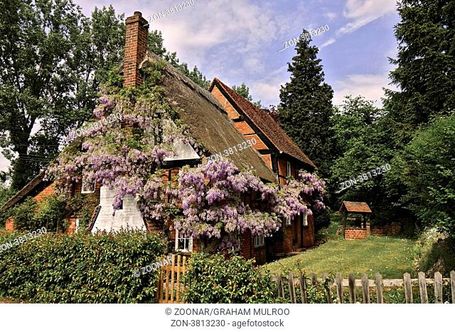 UK Berkshire Wisteria Cottage