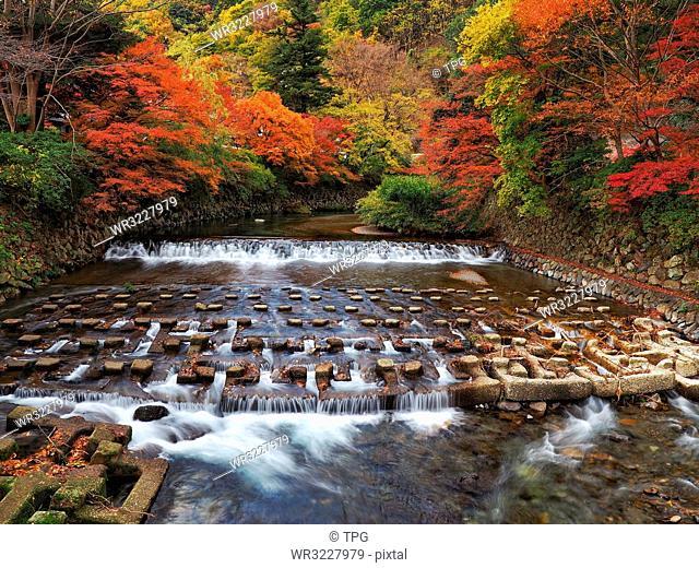 Kyoto eight seas;Kyoto; Japan;