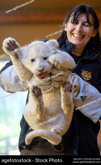 15 January 2020, Saxony-Anhalt, Magdeburg: The animal keeper Susann Paelecke carries a small white lion back into the enclosure