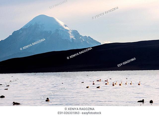 Snow capped Stratovolcano Sajama under the Lake Chungara, Chile-Bolivia