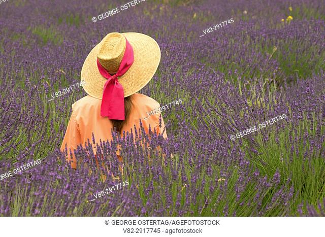 Woman in straw hat in lavender, Mountainside Lavender, Washington County, Oregon