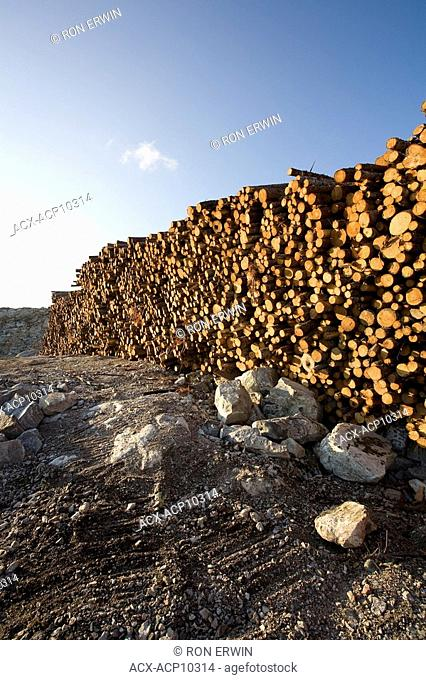 Spruce logs piled on the Labrador Coastal Drive Route 510 between Red Bay and Cartwright, Labrador, Newfoundland and Labrador, Canada