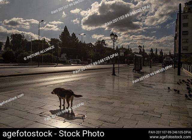 07 November 2020, Greece, Athen: A dog is standing on an almost deserted street. Since Saturday, 07.11.2020, a three-week lockdown has been in effect throughout...