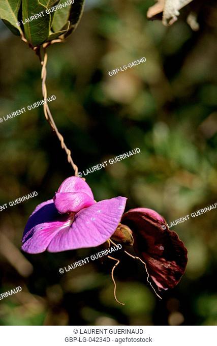 Flower, Vale do Capão, Chapada Diamantina, Bahia, Brazil